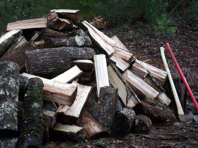 Best wood to burn for firewood