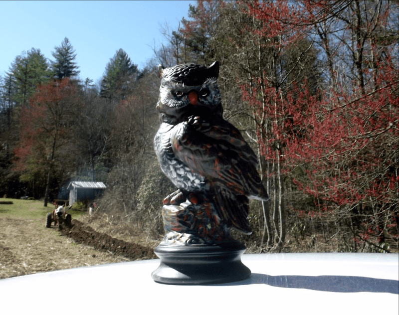 My life in appalachia - Owls In Wilson Holler