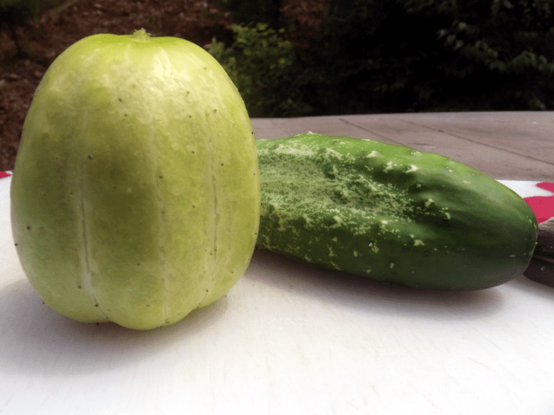 Richmond Green Apple Cucumber Sow True Seed