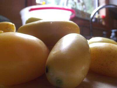 Yellow tomato preserves