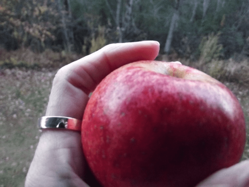My life in appalachia Light - Reach Me A Apple