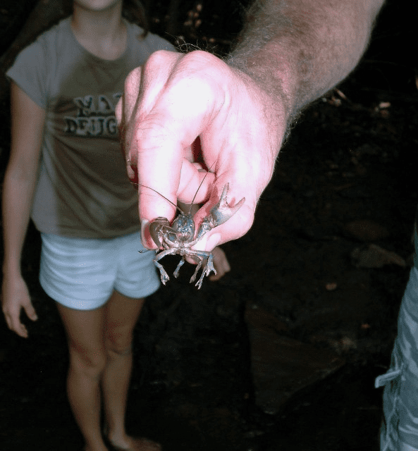 My life in appalachia crawdads