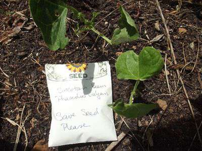 Sow true seed succotash beans
