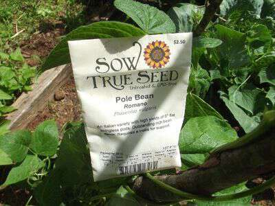 Sow true Seed pole romano beans