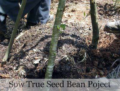 Sow true bean project