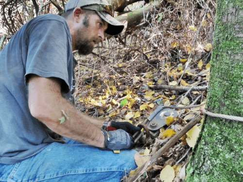 using a winch to cut trees