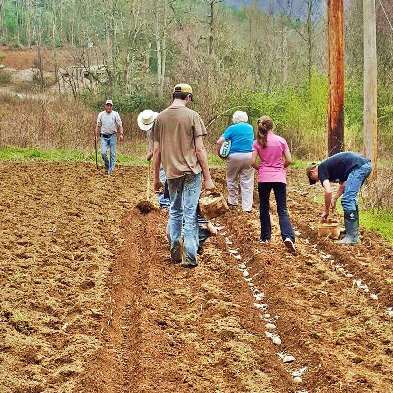 My life in appalachia planting taters