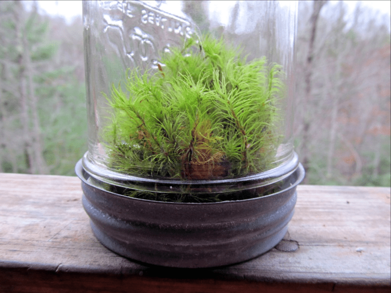 using moss to decorate