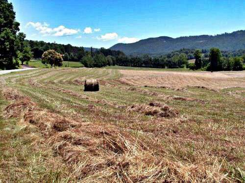 hay-cutting-time