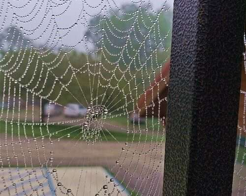Spider-Webs-in-my-way